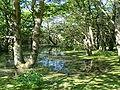 Lac-du-der-2.jpg