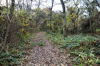 Ladys Wood nature reserve in the United Kingdom