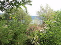 Lago di Albano, a Castel Gandolfo 29.JPG