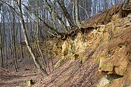 Landschaftsschutzgebiet Vorholzer Bergland - Steinbruch Langer Berg - Obere Jura (15).JPG
