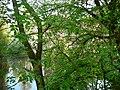 Langenfeld Haus Graven 0011.jpg