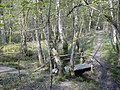 Langley Wood - geograph.org.uk - 417380.jpg