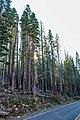 Lassen Volcanic National Park (f99cf8ec-b72d-4d85-afa6-769894ecae18).jpg