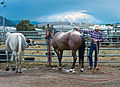 Last Chance Stampede and Fair 2012 (7680648618).jpg