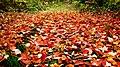 Leafy Path (2894917637).jpg