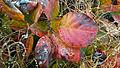 Leaves And Rain 20141113.jpg