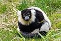 Lemur (27618592738).jpg