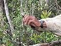 Lemur Trap Marojejy 2009b.jpg