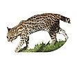 Leopardus tigrinus - Parc des Félins Modified.jpg