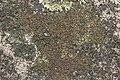 Lichen (28539821738).jpg