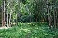 Liebiadziny reserve (Belarus) 03.jpg