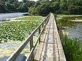 Lilly Ponds Bosherston - panoramio (1).jpg