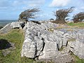 Limestone pavement and stunted trees - geograph.org.uk - 359254.jpg