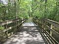 Little River Trail 15, Reed Bingham Park.JPG