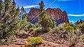 Llama Trail (40025885921).jpg