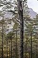 Loch Maree glimpsed through pines, nr. Kinlochewe. - panoramio.jpg