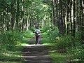Long Green woods Dalmeny - geograph.org.uk - 1138032.jpg