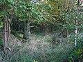 Longmuir Plantation. - geograph.org.uk - 65437.jpg