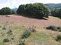 Los colores del campo - panoramio.jpg