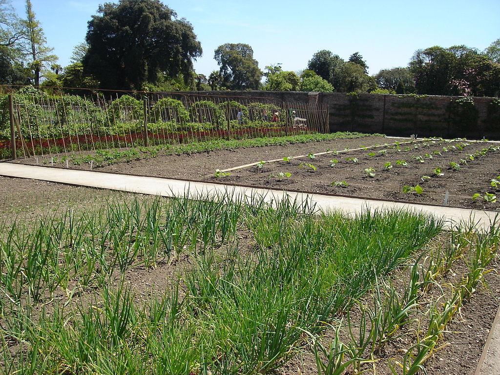 Kitchen Garden Farm Filelost Gardens Of Heligan Kitchen Gardenjpg Wikimedia Commons