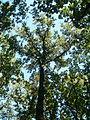 Lunjevac, Lunjevačka šuma, 06.jpg