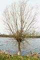 Lusowskie Lake in Lusowko village (5).JPG