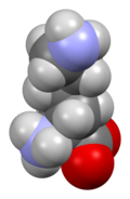 Lysine-van-xtal-3D-sf.png