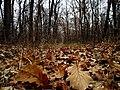 M3, Moldova - panoramio (15).jpg