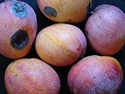 Mango TommyAtkins05 Asit.jpg