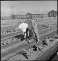 """Manzanar Relocation Center, Manzanar, California. Evacuee in her """"hobby garden"""" which rates highest . . . - NARA - 537984.tif"""