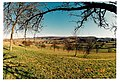 March Spring - Magic Rhine Valley Photography 1990 - panoramio.jpg