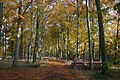 Marmansgrave Wood - geograph.org.uk - 279518.jpg