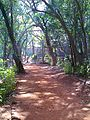 Matheran walking trail.jpg