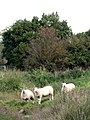 Meet the residents - geograph.org.uk - 1012374.jpg