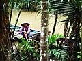 Mekong Delta, Vietnam - panoramio (8).jpg