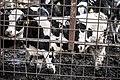 Milk industry 20.jpg