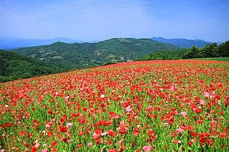 Minano, Saitama - Chichibu Plateau in Minano