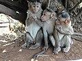Monkeys 03.jpg