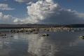 Mono Lake, a large, shallow saline soda lake in Mono County, California LCCN2013632911.tif