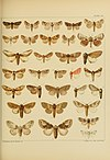 Monograph of the bombycine moths of North America, including their transformations and origin of the larval markings and armature (1914) (14782054852).jpg