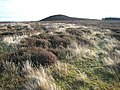 Moorland near Midding Hill - geograph.org.uk - 616245.jpg