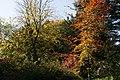 More Autumn Colours, Batsford Arboretum - geograph.org.uk - 1527779.jpg