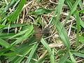 Moth near Sabalito Costa Rica.jpg