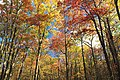 Mount Wismer Nature Preserve (2) (30492208416).jpg