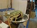 Mr Lobster - before (6032203801).jpg
