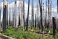 Mt Jefferson burn.jpg