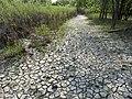 Muddy trail in St. Norbert Provincial Park.jpg