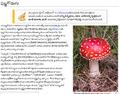 MushroomTeScreenshot.png
