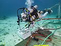 NEEMO 20 Serena Aunon attaching an end effector.jpg