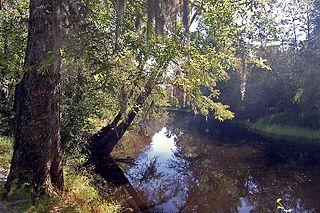 Hallsville, North Carolina Town in North Carolina, United States